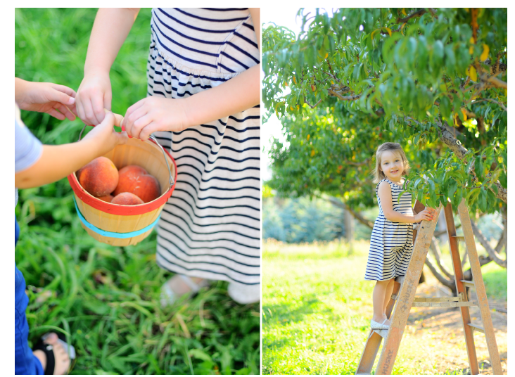 peach picking 1st birthday