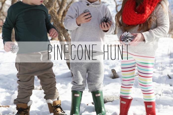 pine-cone-1