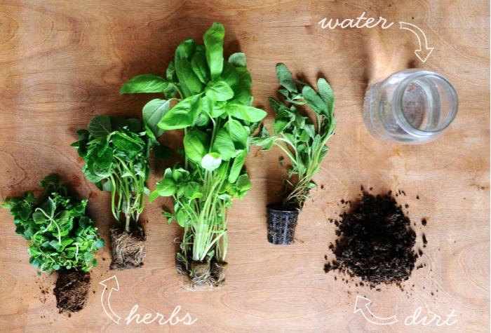 herbs, kids, projects, garden, diy